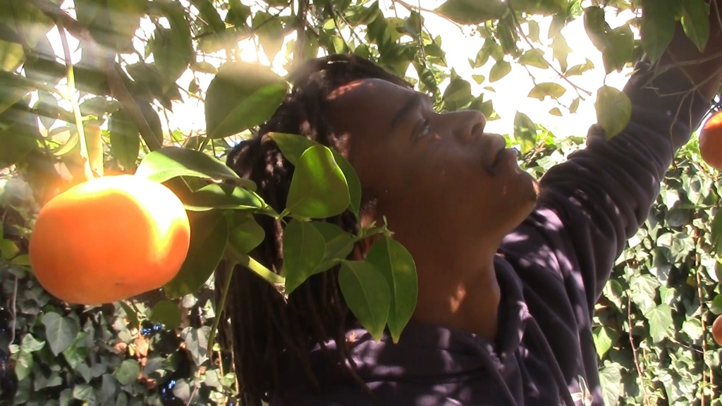 Agyei Graham plucking an orange in his backyard | Sinduja Rangrajan