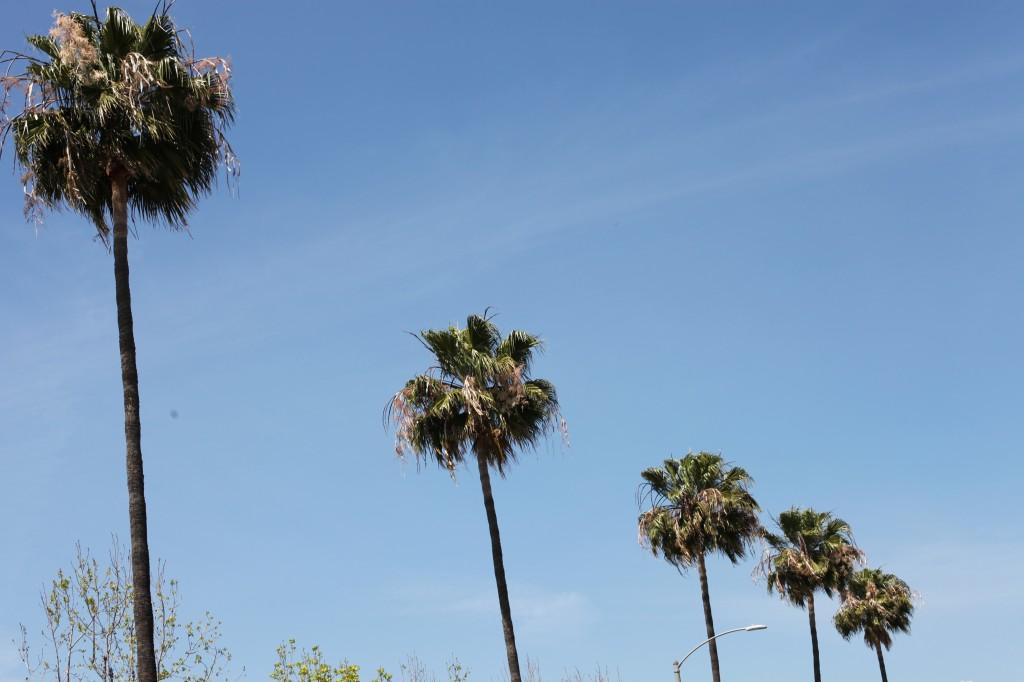 LA's most popular trees.