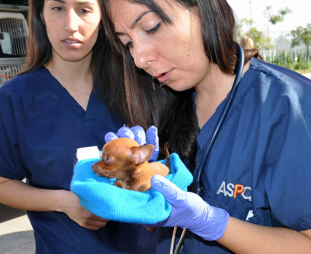 One of the dogs at a recent vaccination fair held at the LA Animal Service Center. | Anita Kelso Edson/ASPCA