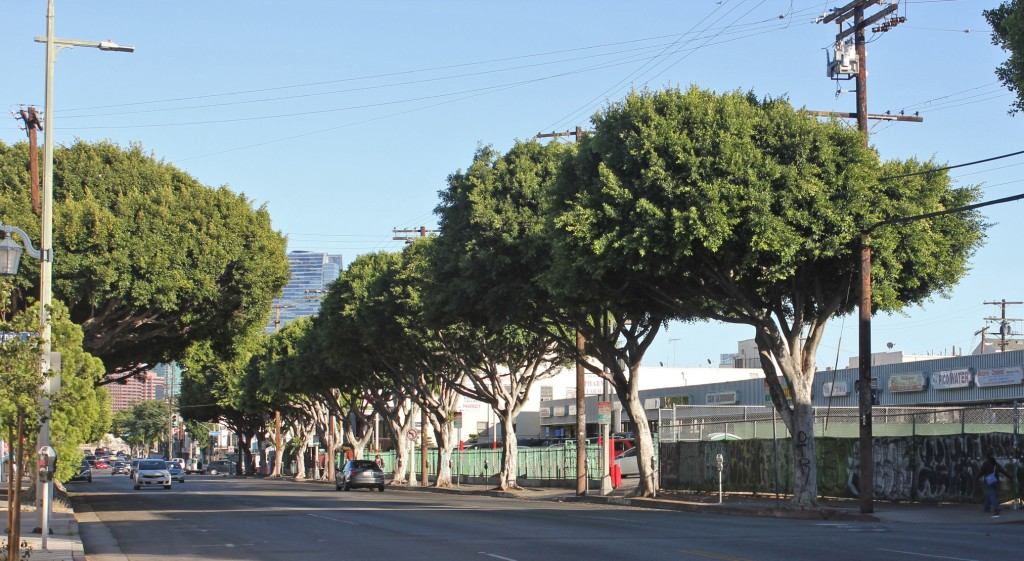The goal of the grant KYCC received is to ensure half of the possible tree sites in South Los Angeles and Pico-Union are planted, creating consistent shade coverage. | Rachel Cohrs, Intersections South L.A.