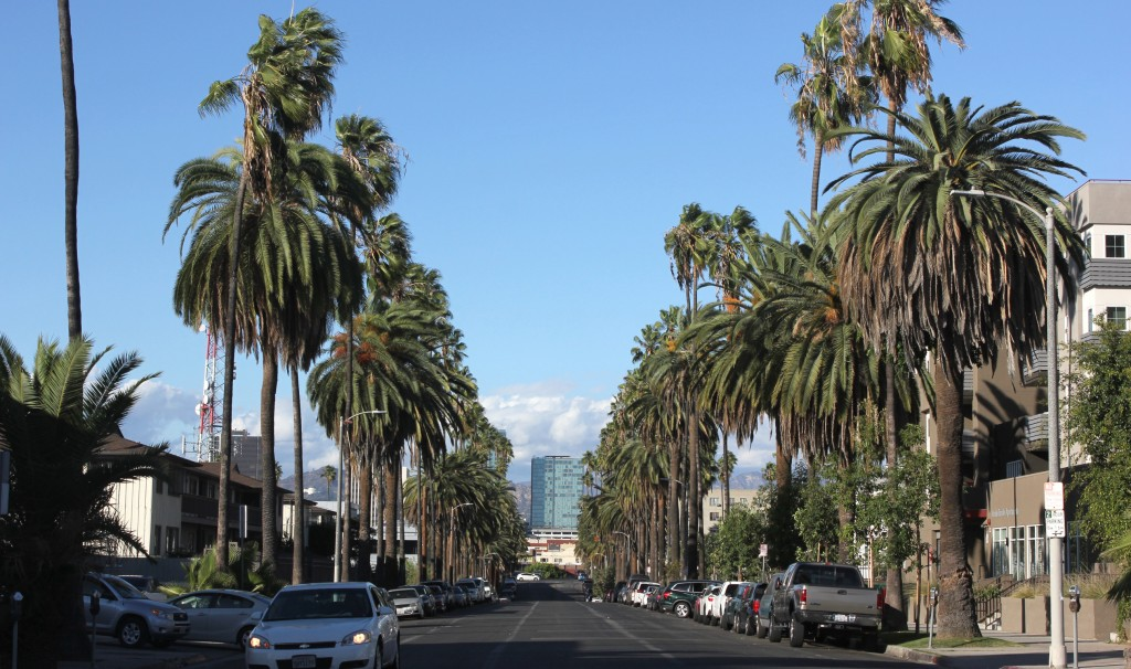 KYCC helped plant small trees between other trees to create shade cover on this street in South Los Angeles. | Rachel Cohrs, Intersections South L.A.